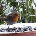 Le chant des oiseaux :