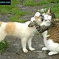 chat et ch