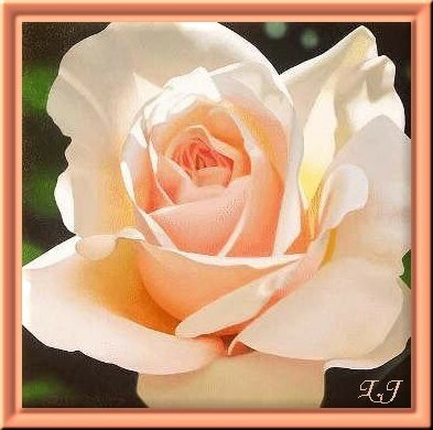 La Rose Peche Pour Le Plaisir Des Regards