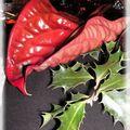 noël rouge noir 030_modifié-1