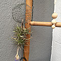 Tillandsia, filles de l'air, air plants, diy