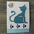Un chat bleu à adopter