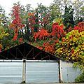 hangar d'automne