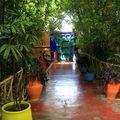 Ballades dans les jardins de majorelle