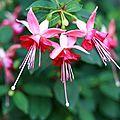 14 fleurs (Large)