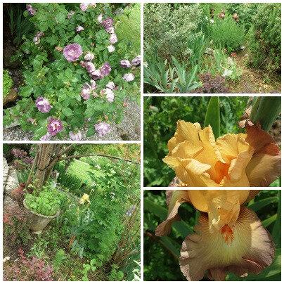 Balades fête des mères brocante jardin (33)