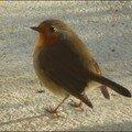 oiseaux_11