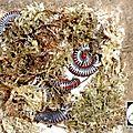 Bourse aux reptiles de offenburg allemagne (22/02/2014)