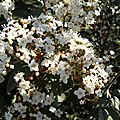 fleurs-2 (9)