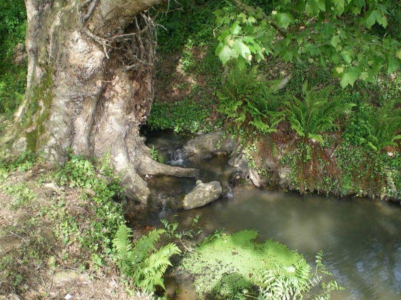 Petite cascade au fond du jardin
