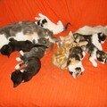 2008 04 22 Les 9 chatons qui dorment ainsi que Papillon