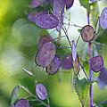 La <b>lunaire</b> en vert et violet ...