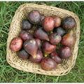 Filet mignon épicé aux figues
