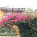 Flore Colombienne