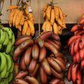 Bananes cosmopolites