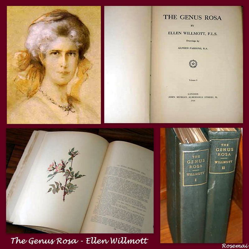 The Genus Rosa (Ellen Willmott)