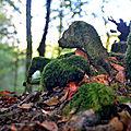 La <b>forêt</b> du mont Beuvrey et la mystérieuse hermine de Bibracte