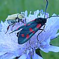 INSECT (331)