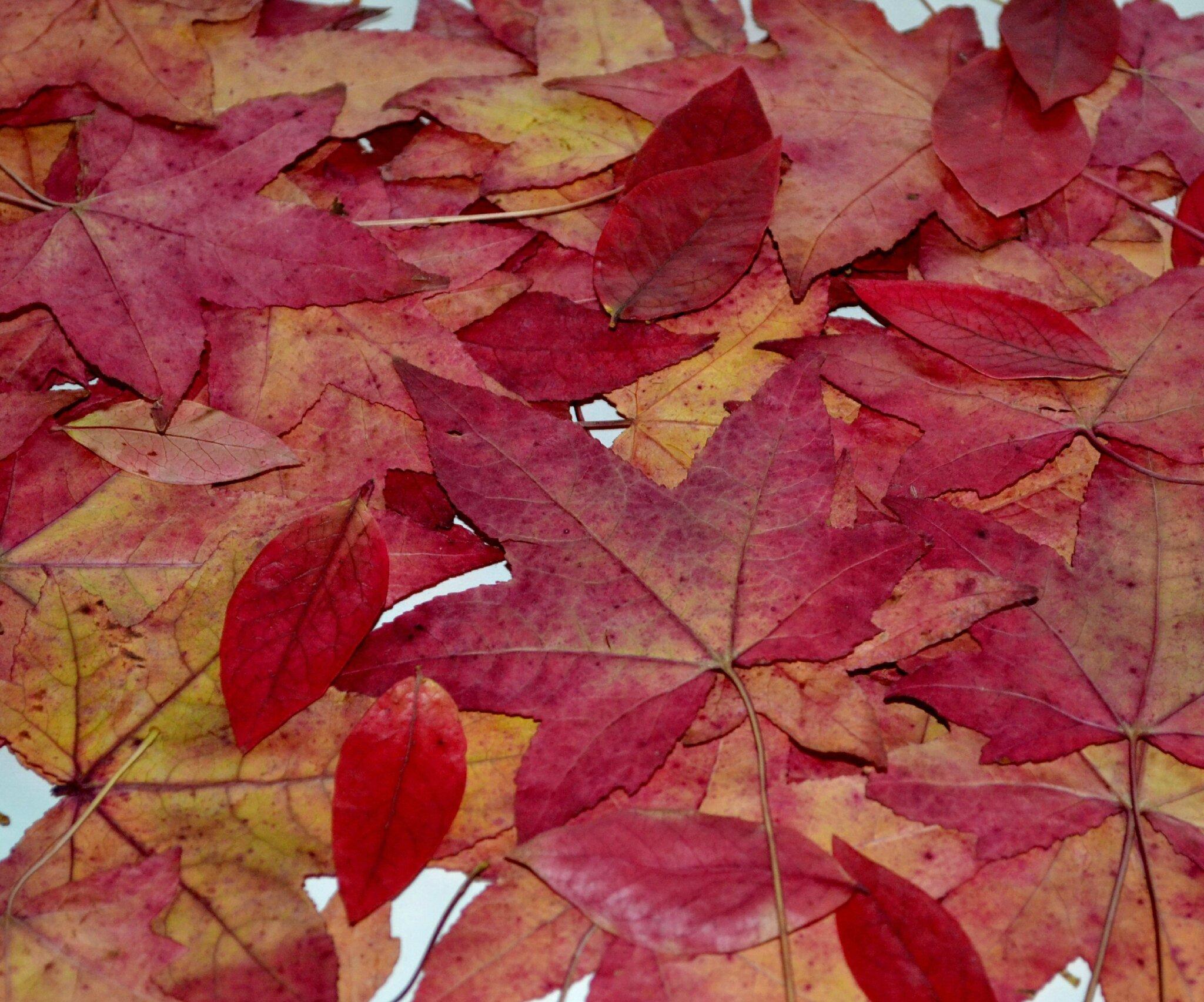 Feuilles d'automne relookées ...