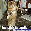 funny-cat-playing-accordion