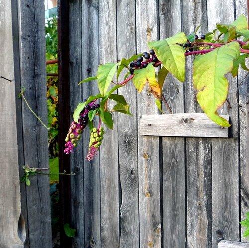 porte de cabane avec phytoloca