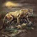 Cougar ou