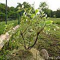 Déplanter, replanter c'est jardiner !