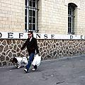 defense d'éléphant_6112