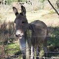 2009 10 30 Un âne