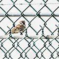 Nouvelle observation ornithologique sur athis-mons