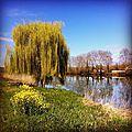 Peyrehorade, bord d'Adour, printemps (64)