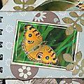 papillon16