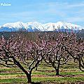 Rêveries de printemps