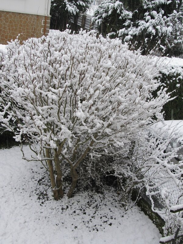 Mon petit jardin sous la neige