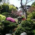Jardin de the japonais