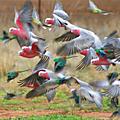 Les <b>oiseaux</b>