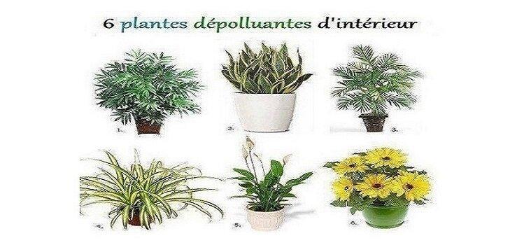 Six plantes dépolluantes d'intérieur