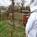 Visite d'un rucher