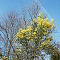 1-Fleurs de Léon 240217