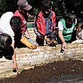 4 - La lombriceria - élevage de lombrics pour bonifier le sol