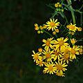 Bouquet de soleil!!