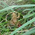 2009 09 01 Une petite grenouille