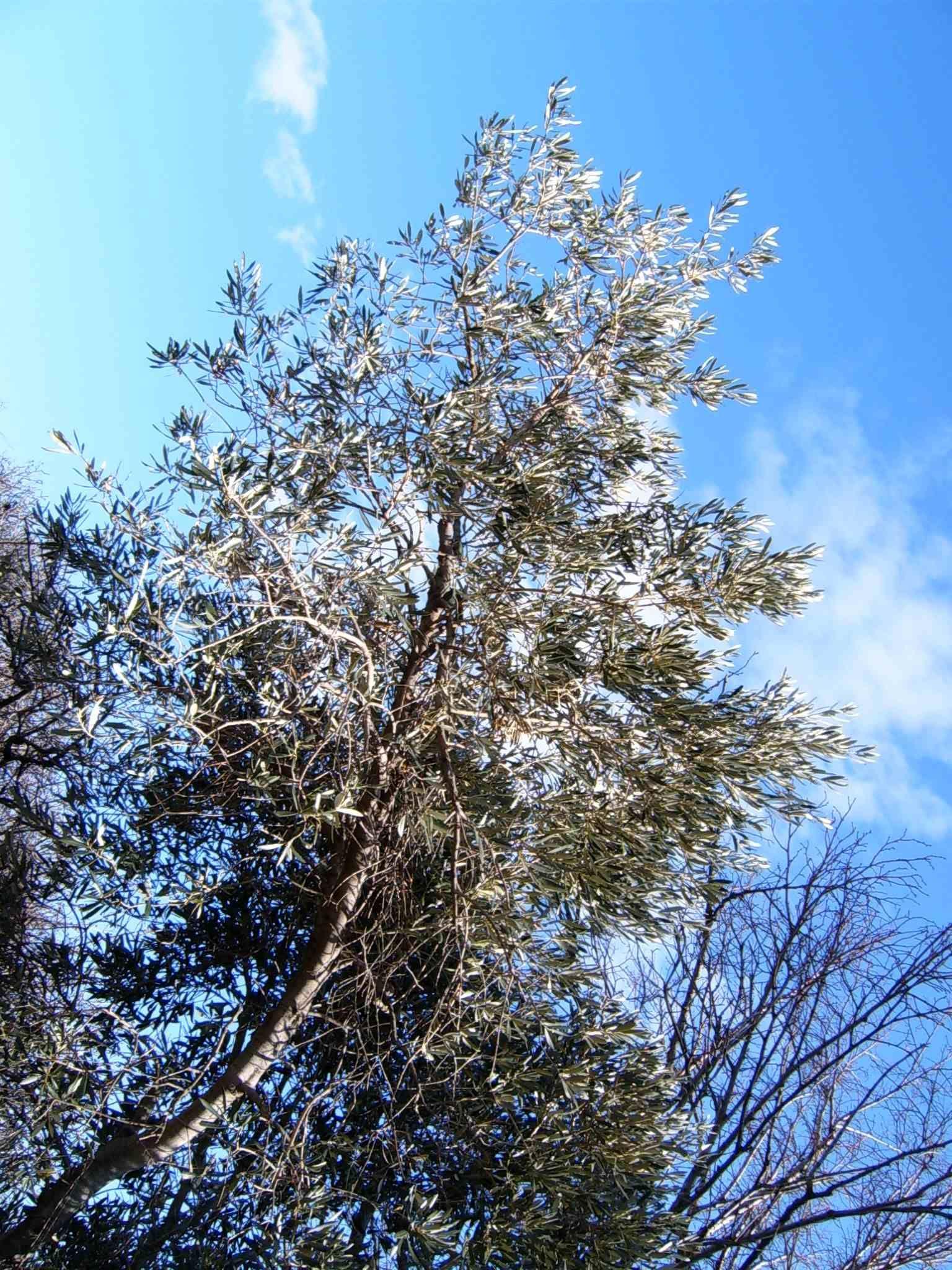 Végétation méditerranéenne Saule Jouques en Provence