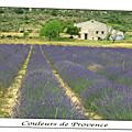 Couleurs de Provence-Les lavandes