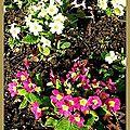 Fleurs autres