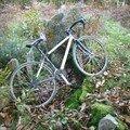 moyen de transport néolithique (faut etre zinzin pour pédaler dans la fôret sur un vélo de course!)