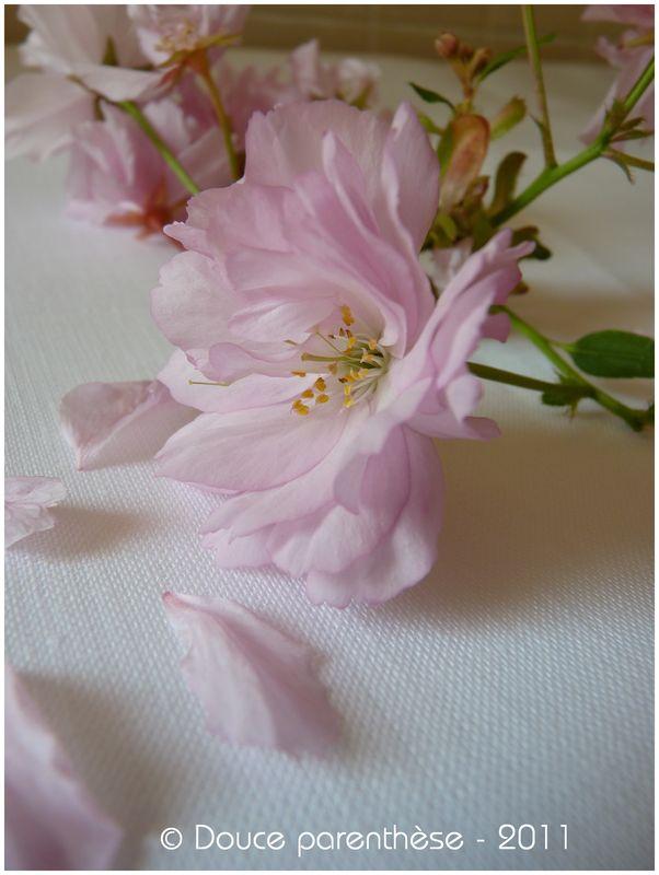 Fleur de Prunus 3