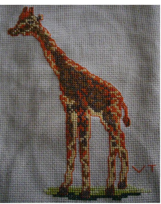 La girafe de ma première ronde