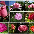 Les fleurs de juillet en pêle-mêle