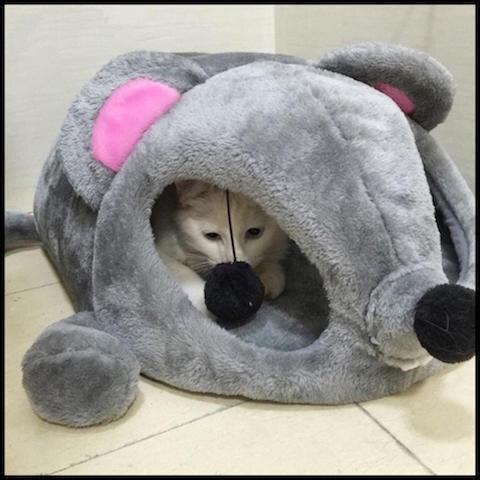 bonheur du chat niche souris 2